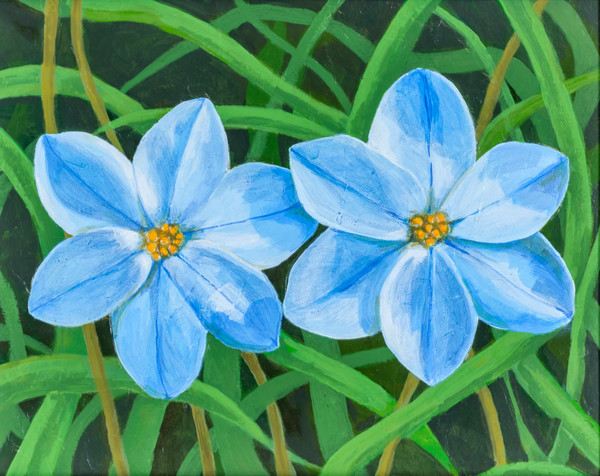 Buy a print of beautiful blue flowers with a rich leafy background.