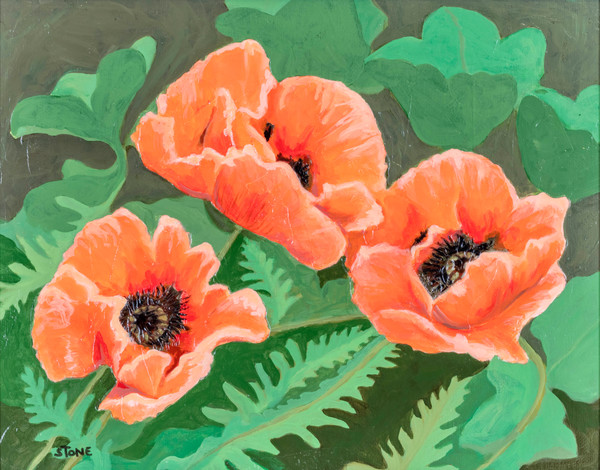 Buy a print of bright orange poppies by artist Debbie Stone.