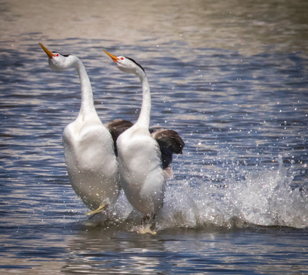 Bird Photos for sale | Barb Gonzalez photography