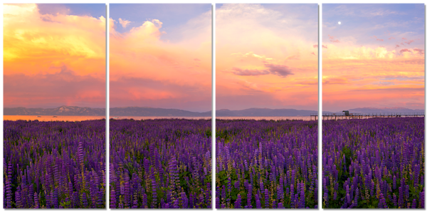 Tahoe City Lupines 4 Piece Canvas Print by Brad Scott
