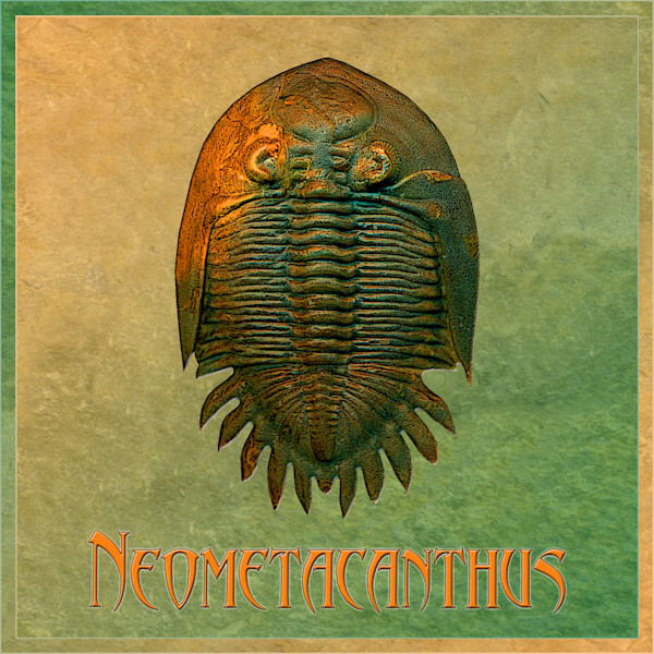 Trilobite and Ammonite Art