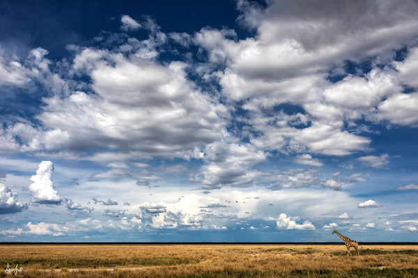 Fine art photograph big sky tiny giraffe Namibia