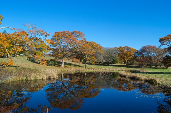 Art photograph of Turtle Brook Farm in Chilmark