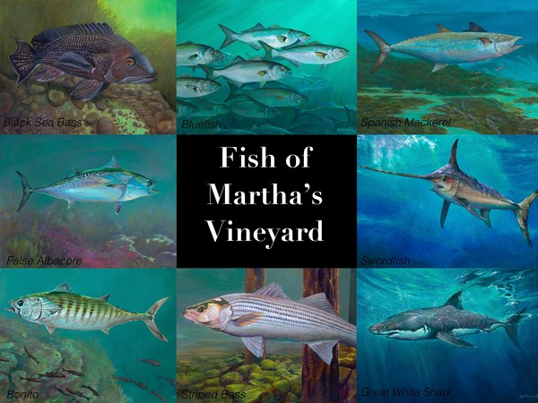 Fish of Martha's Vineyard poster art, Kip Richmond artwork of Martha's Vineyard fish