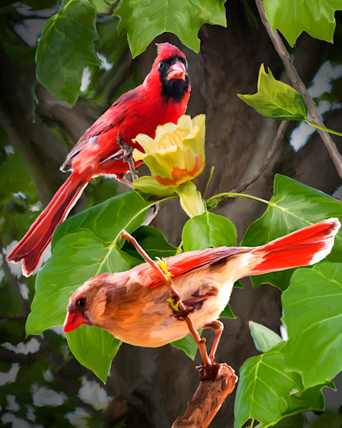 Cardinals in a tulip tree