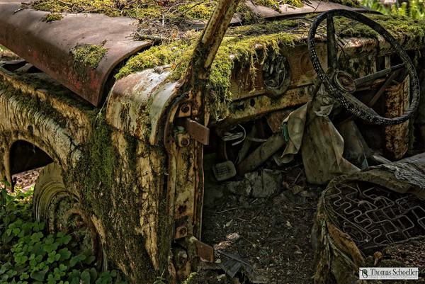Vintage Chevy truck abandoned in the Pacific Northwest rainforest/Available as home decor prints