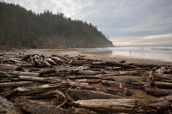 Oregon Coast Driftwood Trees