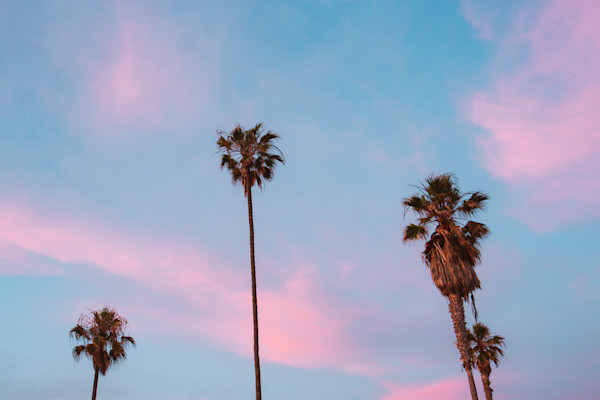 San Diego Beach Cotton Candy Palms