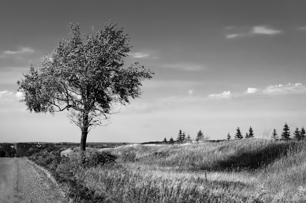 Tree in rural ontario photograph in black white for sale as fine art sage