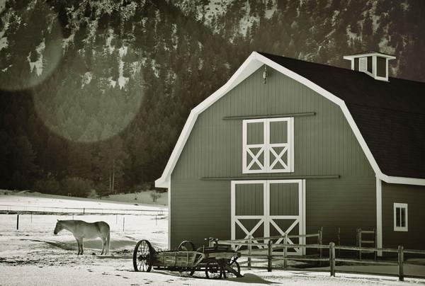 B&W Photo of Colorado Horse Barn White Horse in Winter Snow