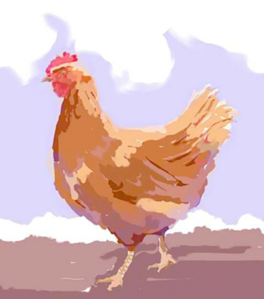 Chickens can be cute too - Kara Boulden
