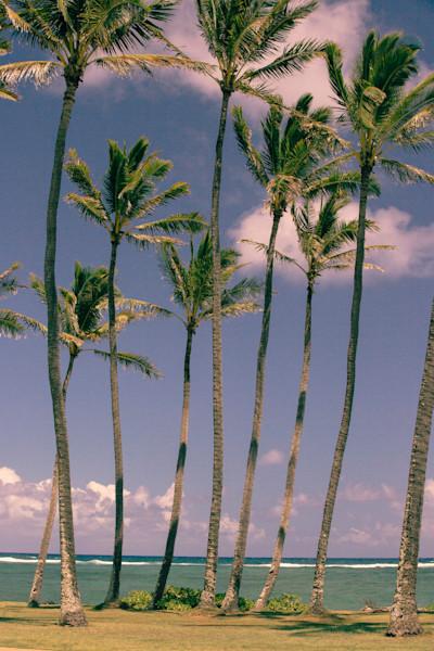 Kapaa Palms Kauai