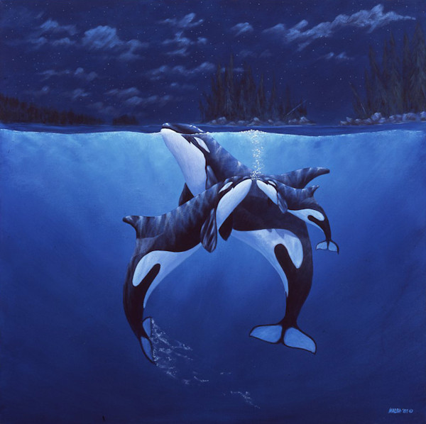 Northern Eve, Orcas