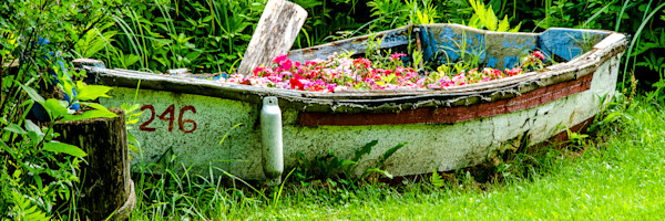 Old rowboat used as planter, in panorama fine art photograph