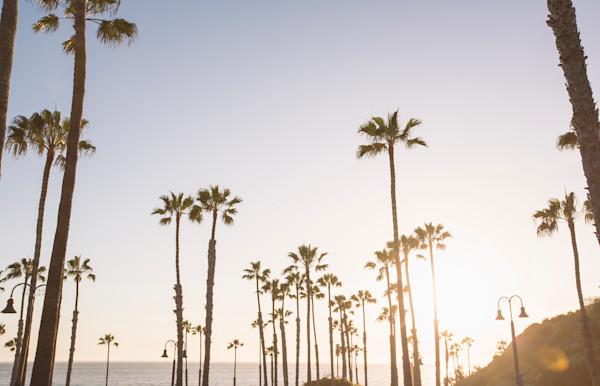San Clemente Palms