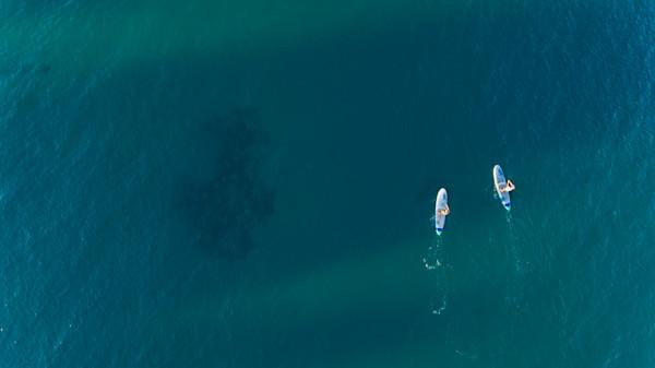 Maui Paddle Boarders