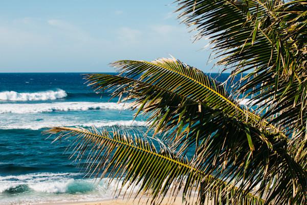 Hookipa Palm Tree