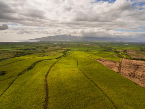 Sugarcane Field Lit Two Aerial