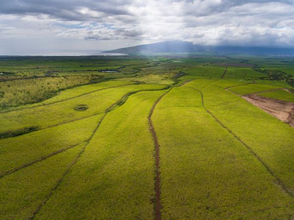 Sugarcane Fields Lit Aerial