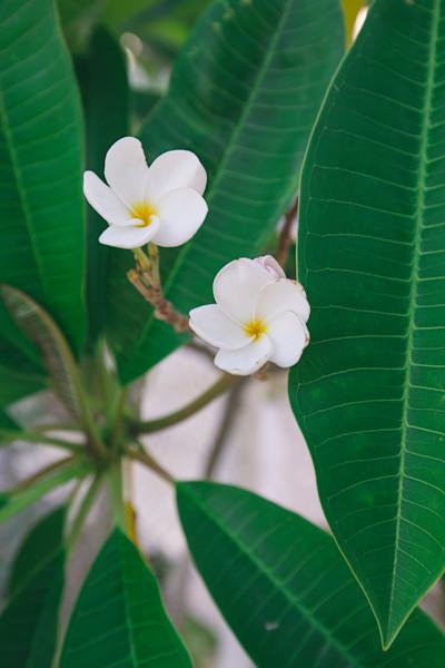 Florida Flora