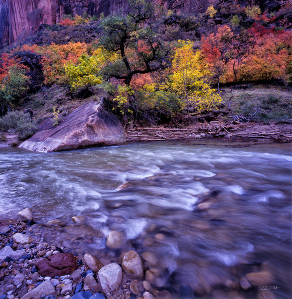 Southwest fine art photograph of fall colors at Virgin River, Zion. By Richard Stefani - Stefani Fine Art.