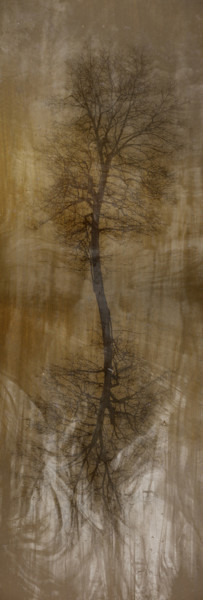 Arbor-Kevin Blackburn Virginia Fine Art Photographs,Prints on Metal, Canvas, Acrylic, Fine Art Paper, Museum Prints