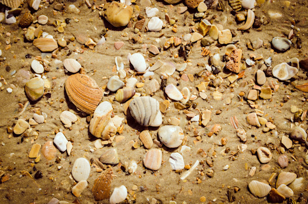Broken Seashells and Sand Limited Edition Signed Fine Art Nature Photograph by Melissa Fague