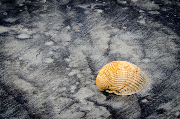Black Sands and Seashell on the Shore Nature Photo Wall Art by Nature Photographer Melissa Fague