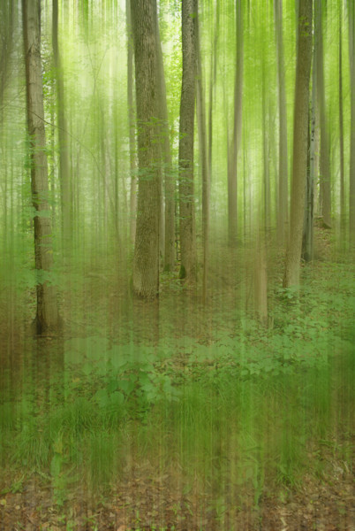 Green Blur by Michele Taras | SavvyArt Market photograph