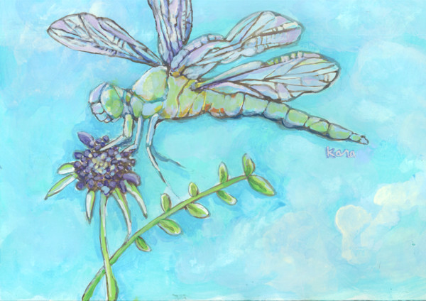 For the love of nature and dragonflies