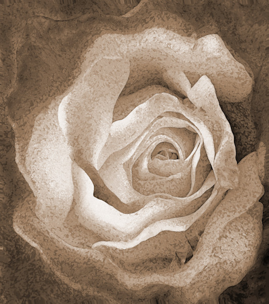 Stone Rose by Michele Taras | SavvyArt Market photograph