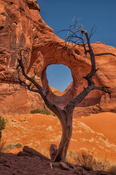 Hole in Rock with Tree photograph for sale by Richard Stefani – Stefani Fine Art