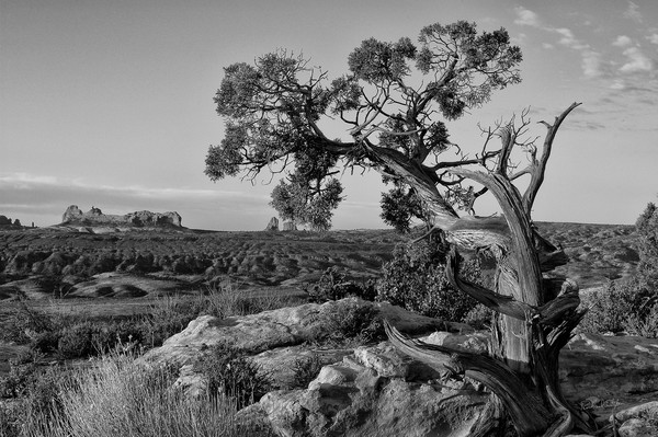 Old Tree Overlooking Arches photograph for sale by Richard Stefani – Stefani Fine Art