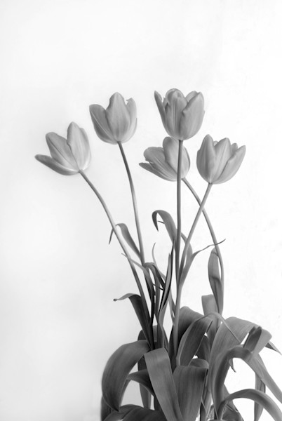 Flower Dance B&W by Michele Taras | SavvyArt Market photograph