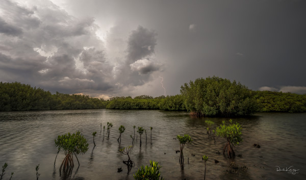 Lightning strikes at the Mangrove in Tampa, Florida