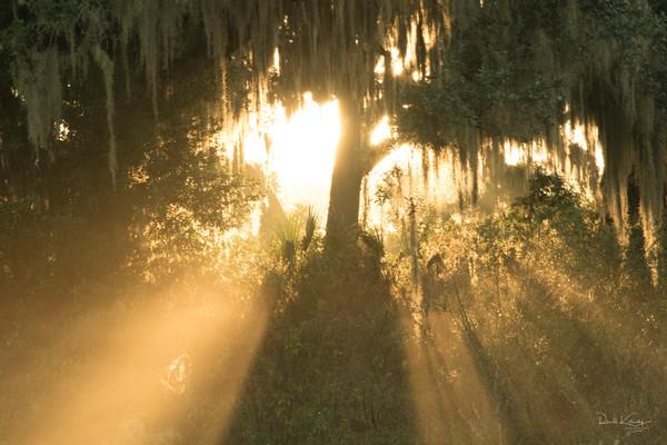Heavens gate art photograph from Florida