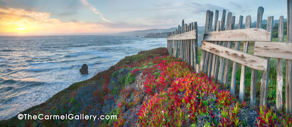 Picket fence, ice plant, pacific ocean, sunset at Black Point, Sea Ranch, California