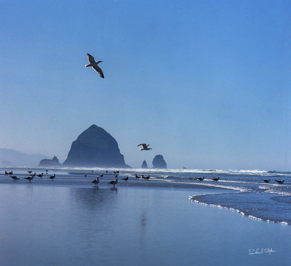 Haystack Rock with Seagulls