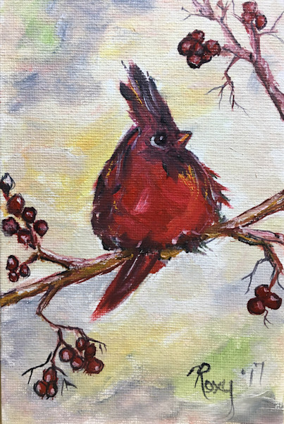 fluffy Red Cardinal in a Holly Berry Tree