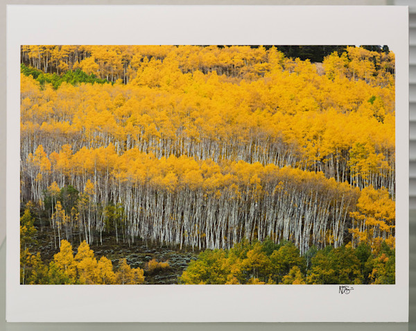 Aspen Grove 11x14 Print