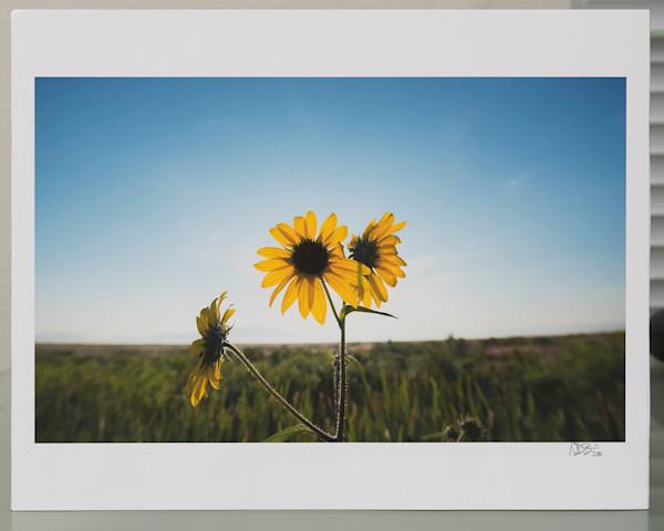 Sunflower - 11x14 Print