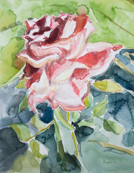 Floral Watercolor Art – Original Paintings – Fine Art Prints on Canvas, Paper, Metal & More