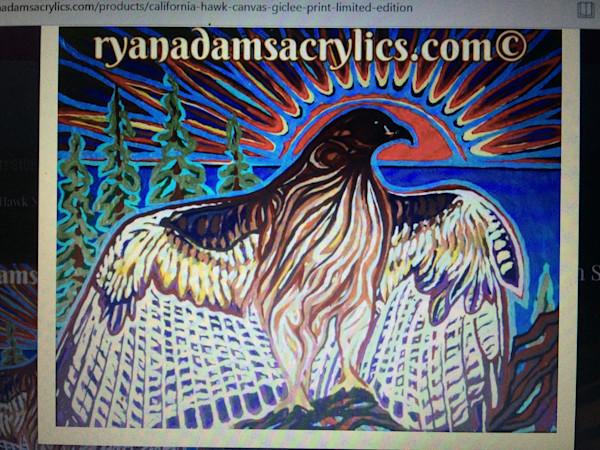 California Redtail Hawk,
