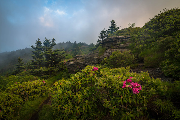 Summer Rhododendron Bloom Photograph for Sale as Fine Art