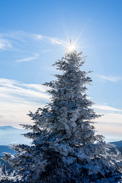 Snow-covered Tree Photograph for Sale as Fine Art