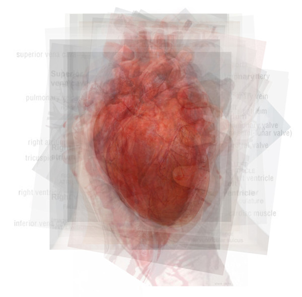 Overlay art – contemporary fine art prints of the Human Heart