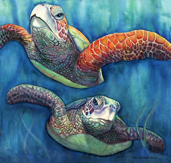 Buds Sea Turtles