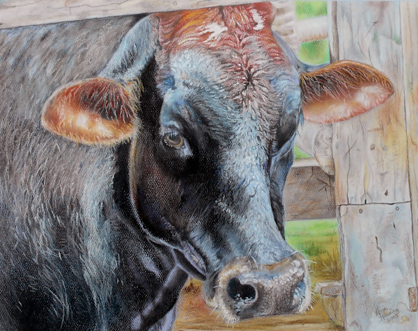 """""""African Bush Cow"""" by Gina Harding 