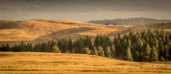 Golden Hills Panorama Photo for Sale by Barb Gonzalez