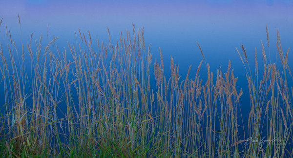 Sunrise-reeds